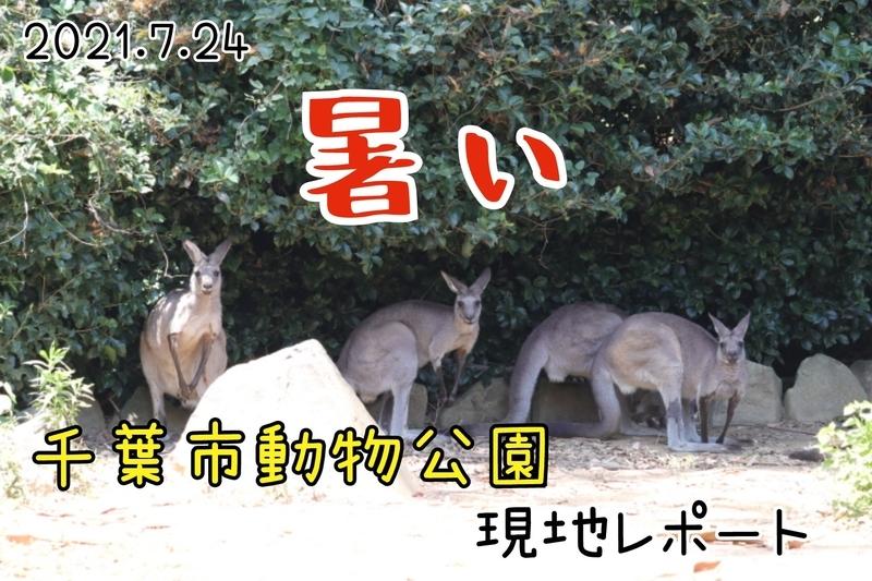 f:id:zoonimal:20210808211518j:plain