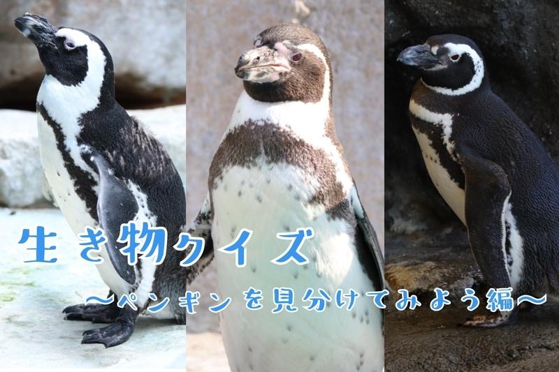 f:id:zoonimal:20210815214204j:plain