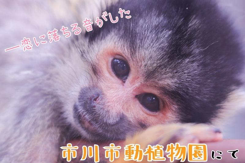 f:id:zoonimal:20210821215408j:plain
