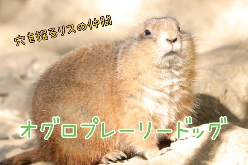 f:id:zoonimal:20210822222044j:plain