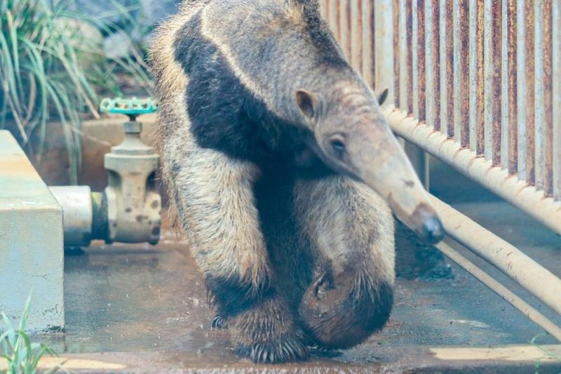 f:id:zoonimal:20210829121226j:plain