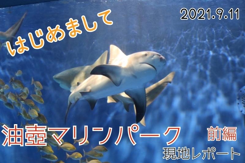 f:id:zoonimal:20210926124655j:plain