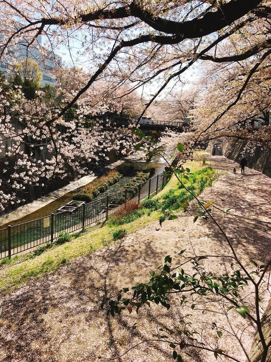 緑橋(みどりばし)石神井川