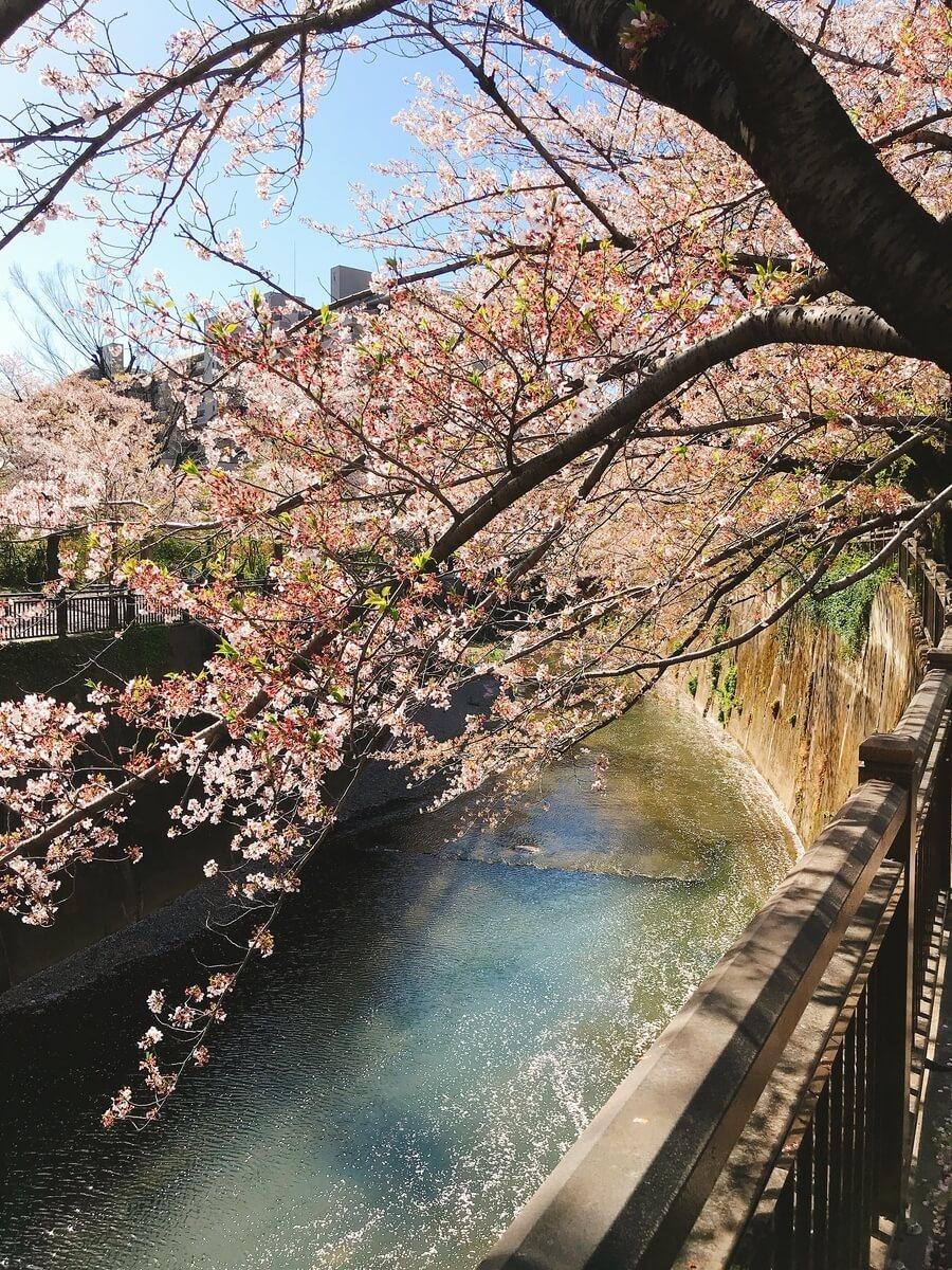 加賀二の橋の石神井川
