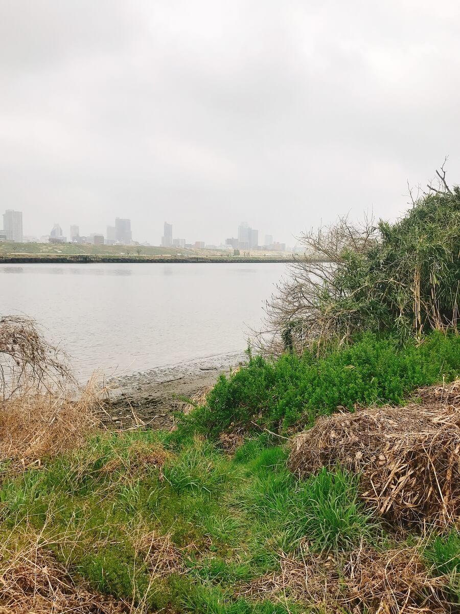 新河岸川と荒川で五目釣り