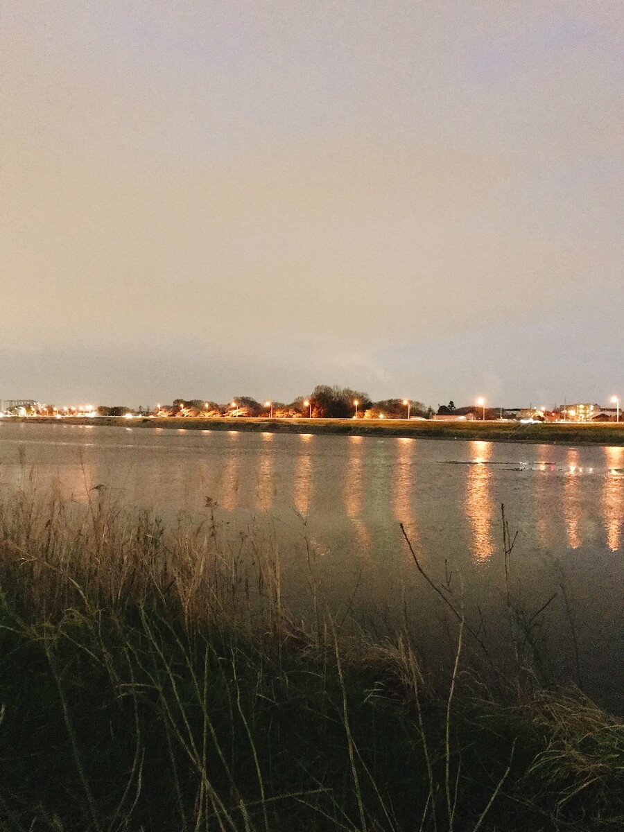 多摩川ナマズ