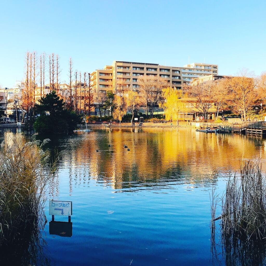 板橋区見次公園でモツゴ(クチボソ)