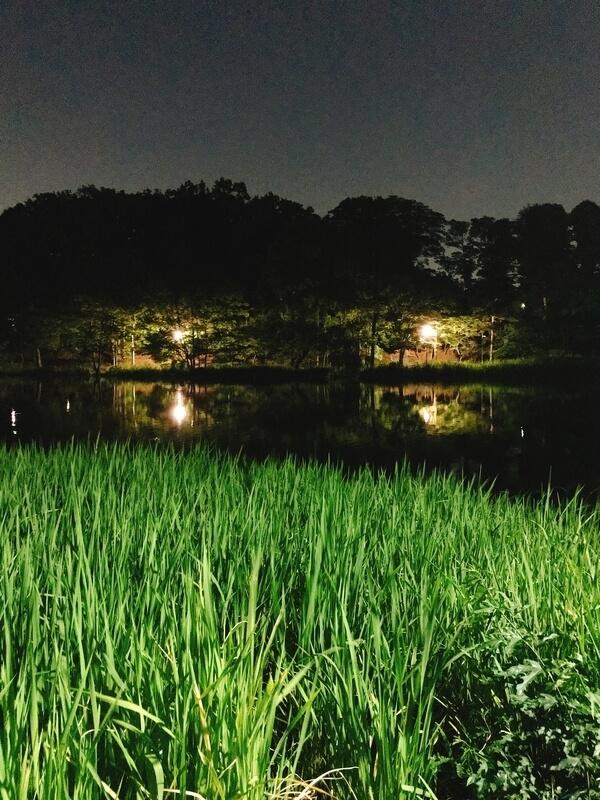 石神井公園タウナギ