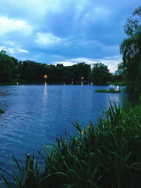 タウナギの時合にあわせた夜の石神井公園