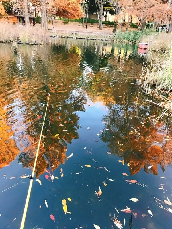 石神井公園タウナギ釣り