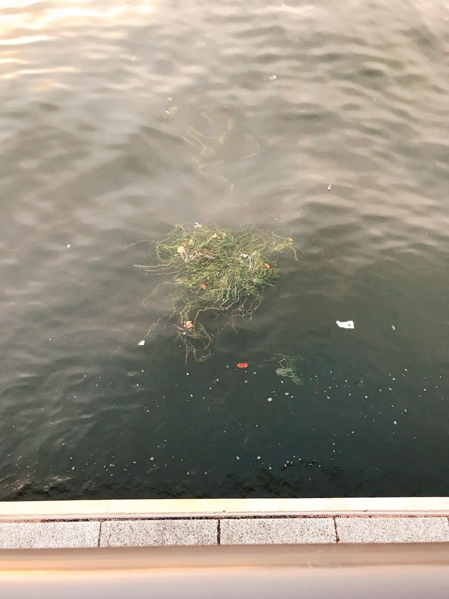 東京湾のゴミを減らしたい