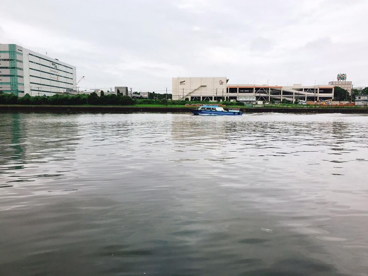 京浜運河はシーバスのベイトが濃いかも