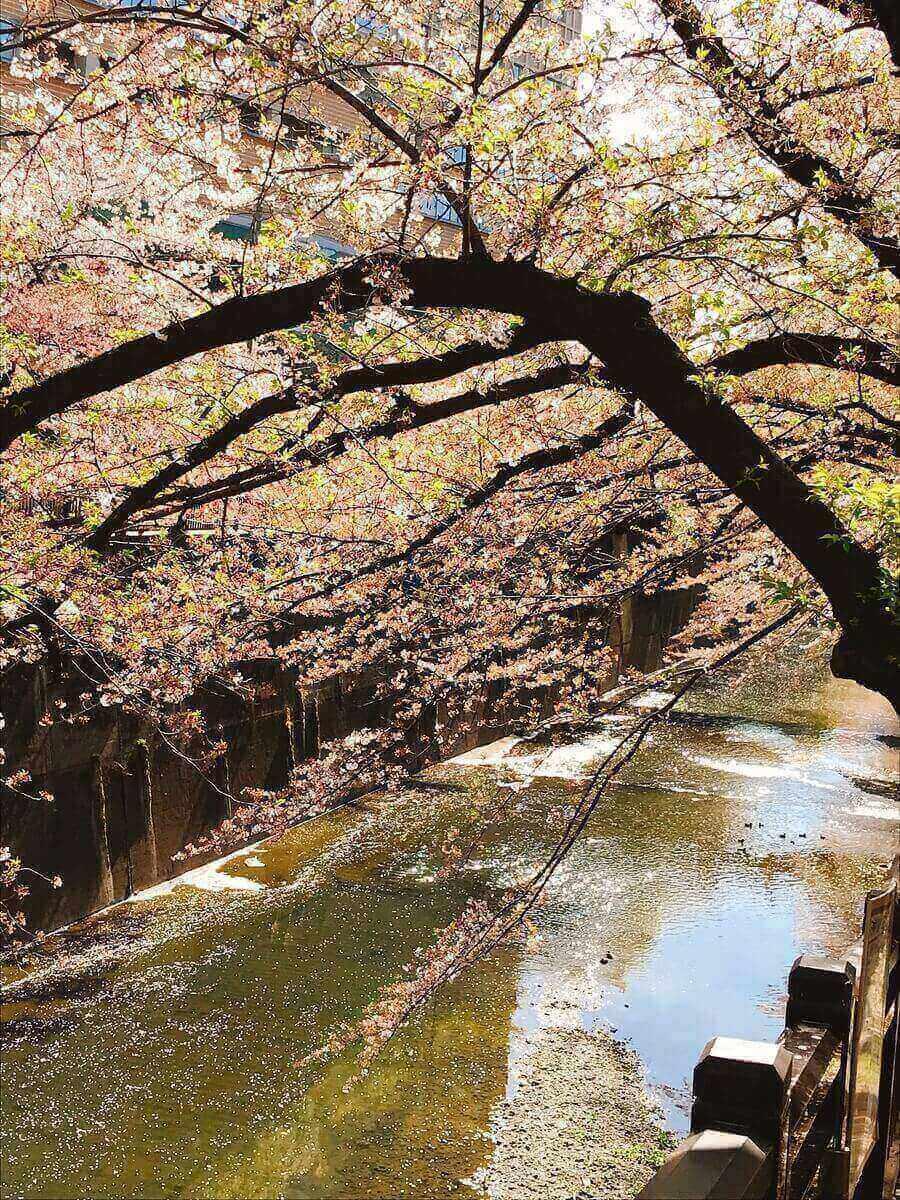 石神井川釣りポイント