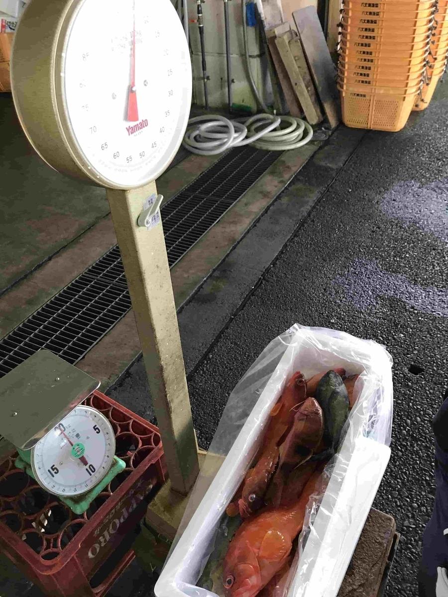 神湊漁港釣り