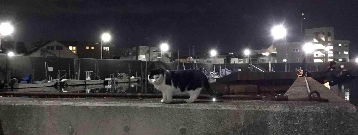 浦安堀江ドッグ猫ねこ
