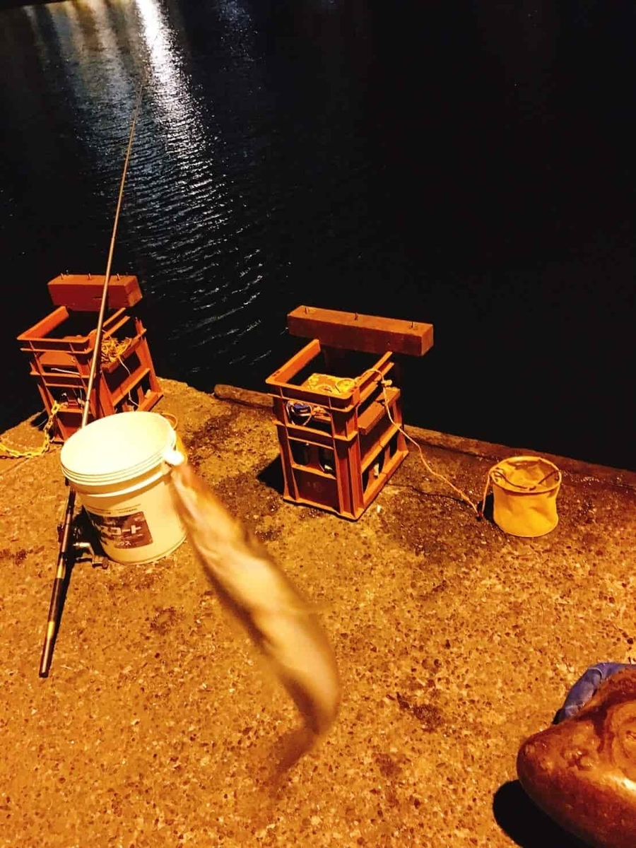 小湊港カマス釣り