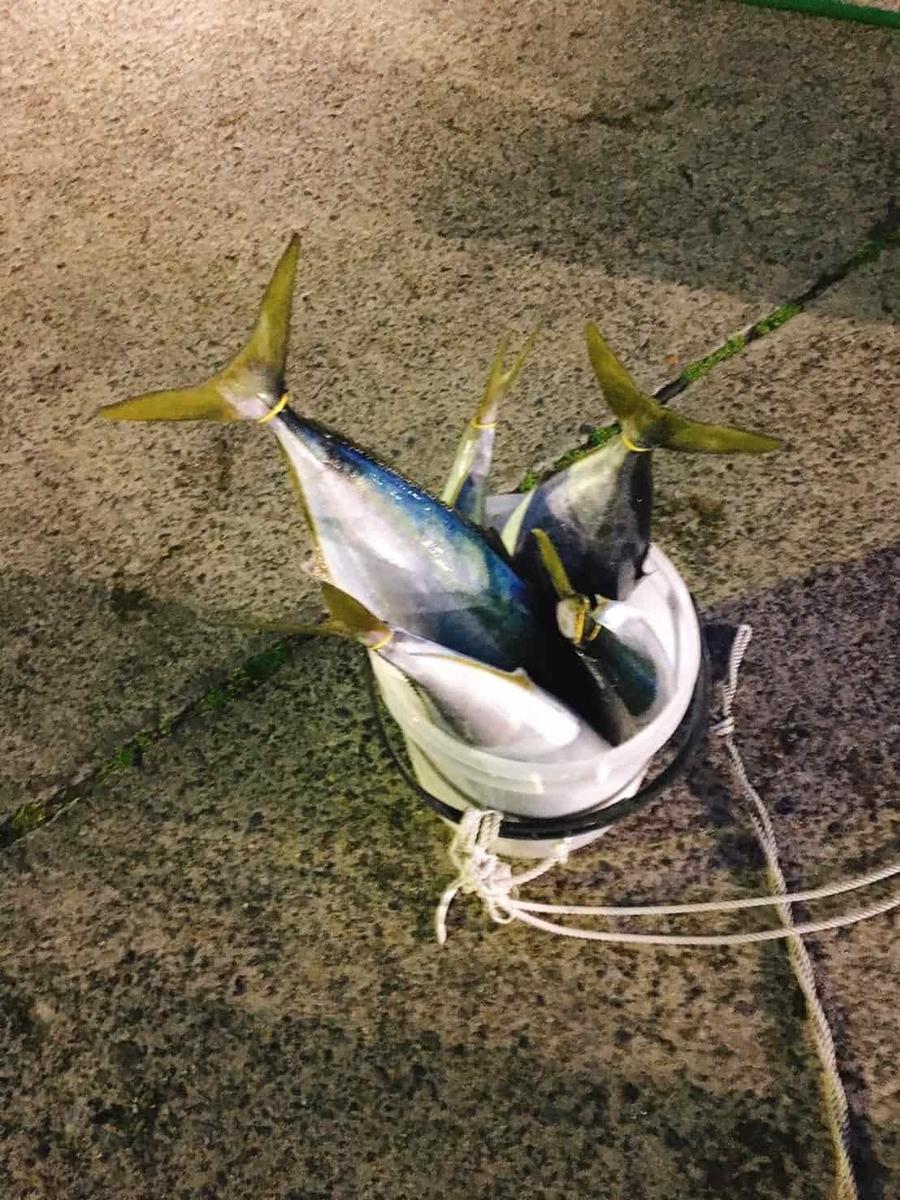 川津港ワラサ釣り