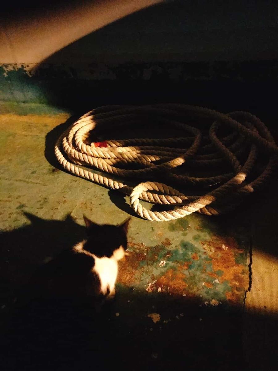 鴨川漁港猫