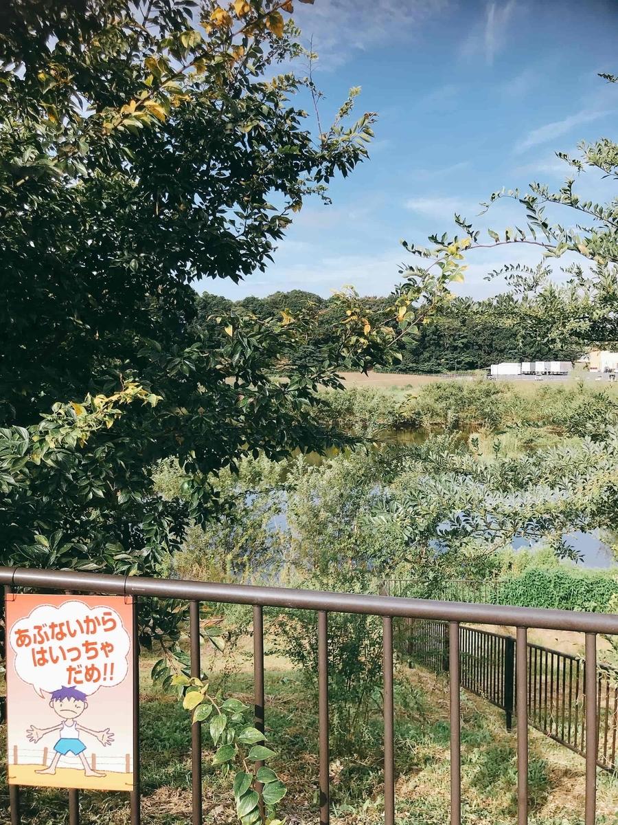 ゆめみ野公園調整池釣り