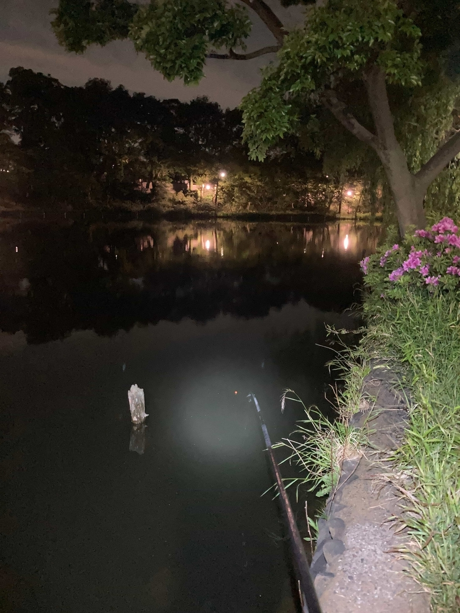 石神井公園釣り