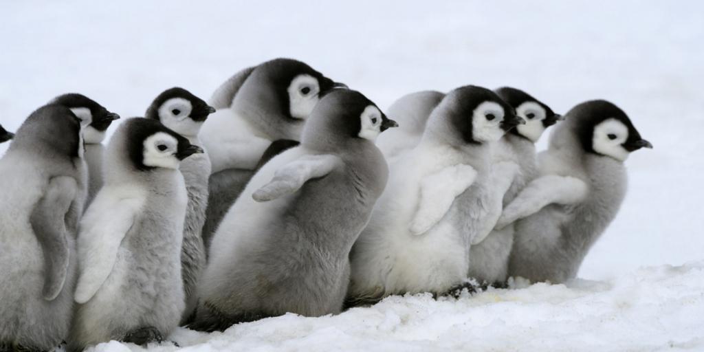 ペンギンアップデートとは?