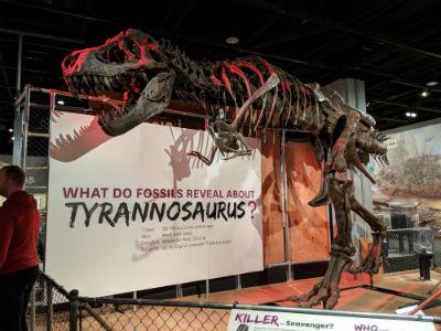 ティラノザウルスの化石