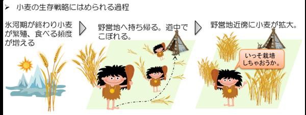 小麦の生存戦略にはめられる過程|サピエンス全史