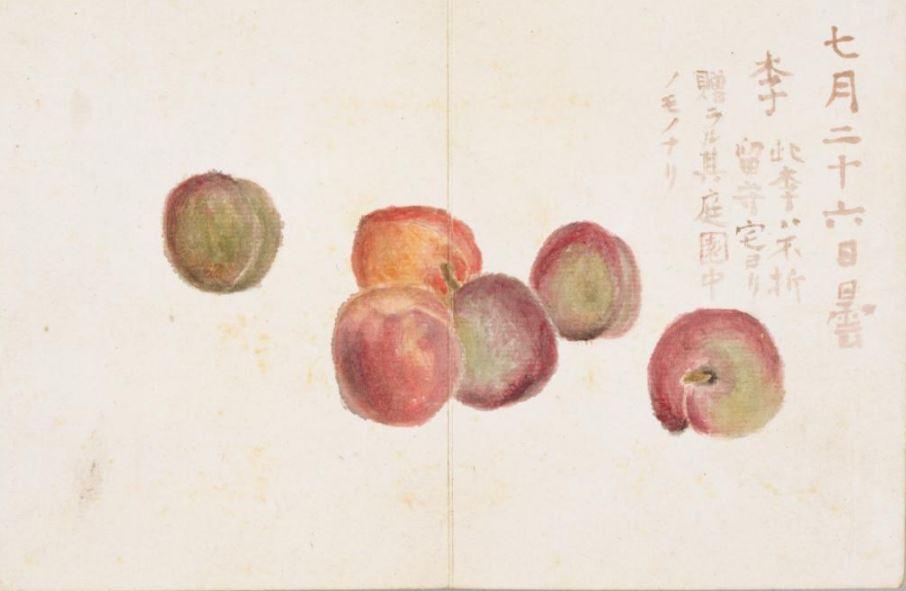 f:id:zukunashitosan0420:20210622150649j:plain