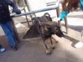 [イヌ]警察犬