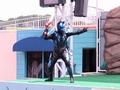[仮面ライダー][キバ][ショー]ニャオセイバーに封印されたスフィンクス族を召還