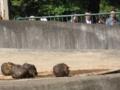[動物]アジアゾウ