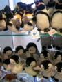 200904江ノ島水族館で猫と戯れるオフ