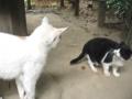 [猫]こっち見んな
