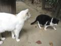 [猫]こっち見ん…なんでもないです…