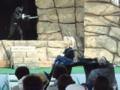 [仮面ライダー][ショー][ディケイド][キバ][カブト]勇ましいゼクトルーパー