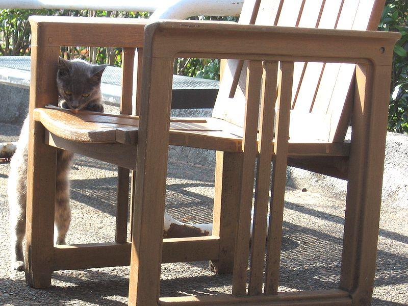 売店に巣くう野良猫@よみうりランド