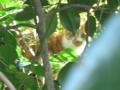 [猫]売店近くの野良猫@よみうりランド