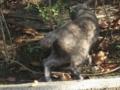 [猫]よみうりランドキャット 猫またぎ