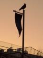 [風景][鳥]よみうりランドのカラス