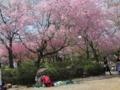 [風景]桜吹雪@聖地公園