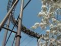 [風景]桜とバンデッド